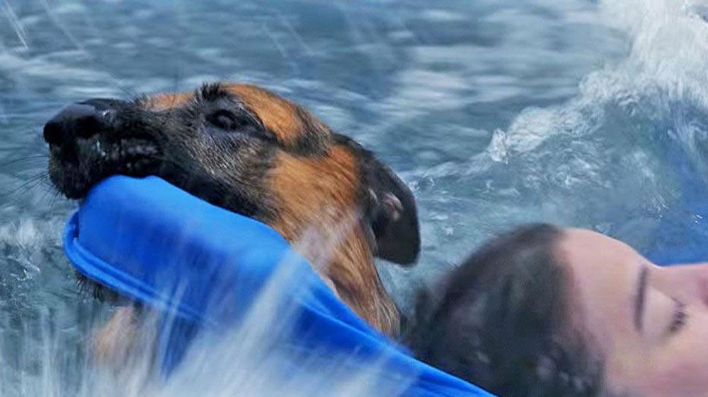 A dog's purpose animal abuse