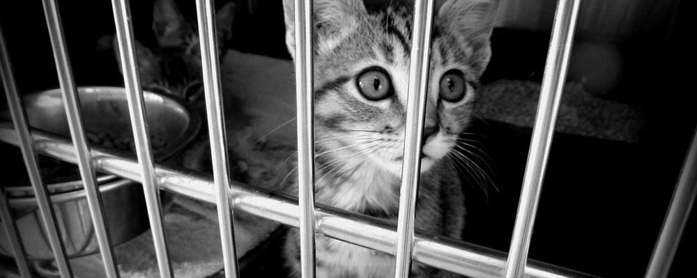 Stop Animal cruelty shelter