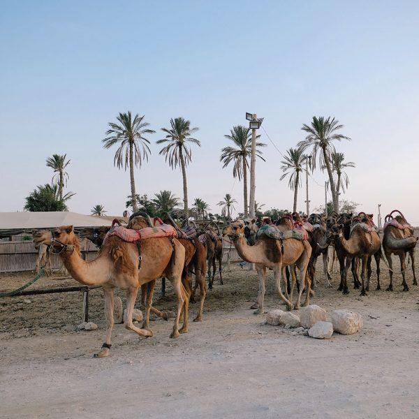Kfar Hanokdim the perfect bedouin experience Judean desert Israel